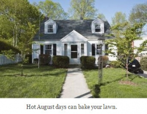How to Care for a Lawn in August