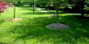5 Tips for Greener Summer Grass