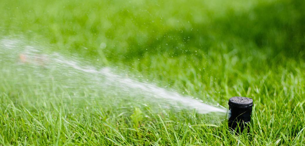 Provide Healthy Green Grass